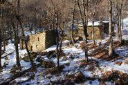 alcuni vecchi gias nel bosco sopra Danna (5-1-2013)