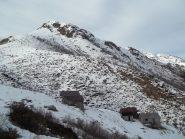 L'Alpe Campo (Bassa del Campo)