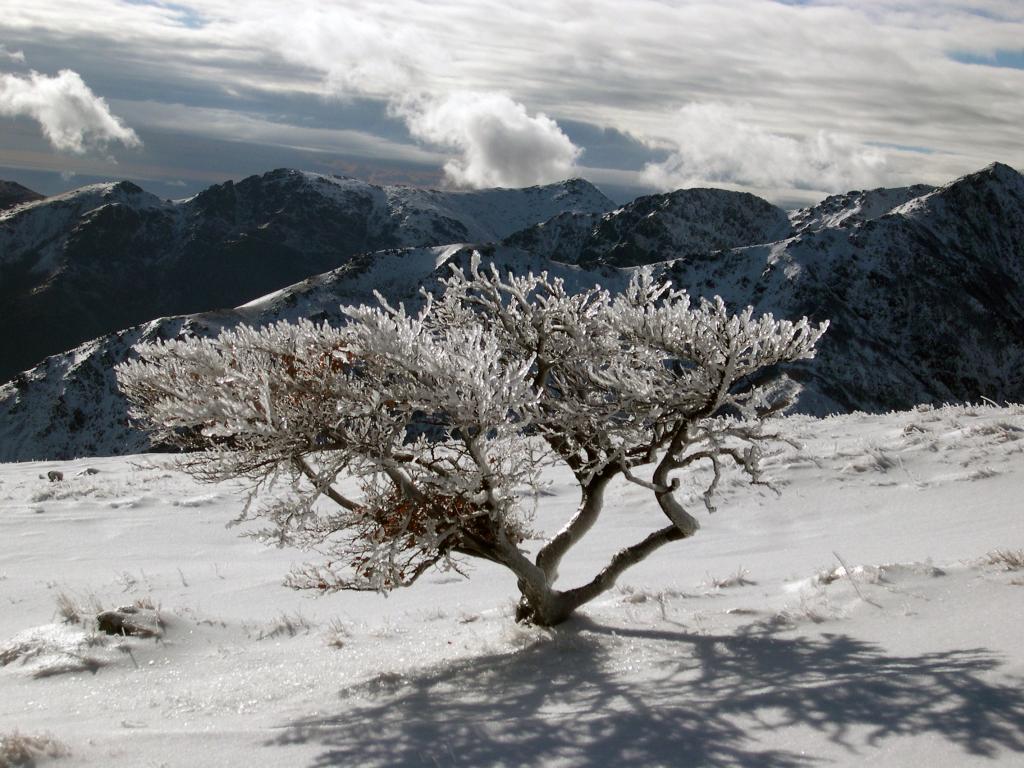 Giallo (Monte) Alta Via Monti Liguri 2013-01-22