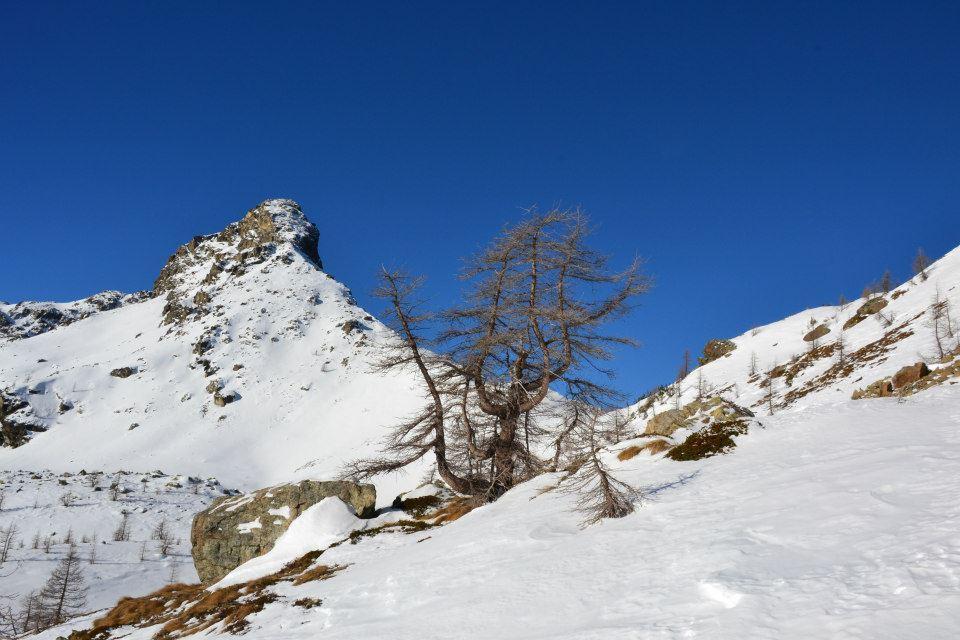 Piana (Cima) o Mont de Panaz da Mont Blanc 2013-01-26