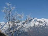 Panorama sulle Quinzeine