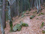 nel bosco verso Nivolastro