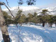 il bosco che si attraversa nella discesa dal monte Poggio