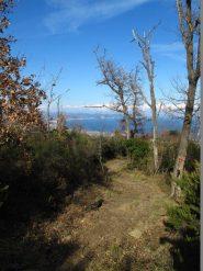 Nel bosco verso Albenga