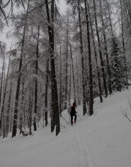 ambiente natalizio in foresta