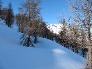 quasi fuori dal bosco... la neve è splendida