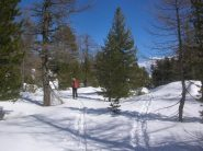 Il bosco sotto la cappella di Muni