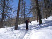 la traccia di salita nel bosco...