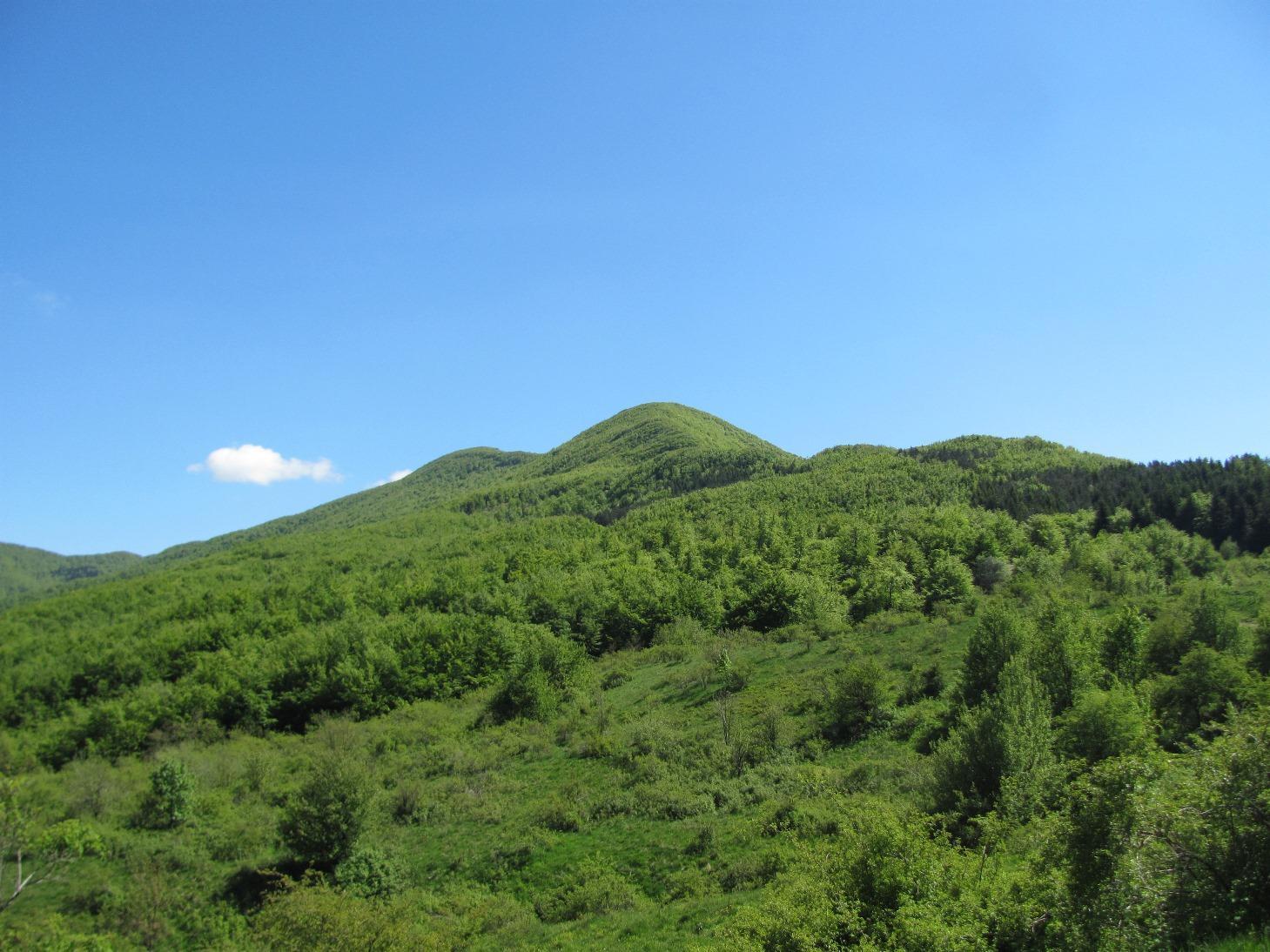 Il versante boscoso del Monte Gottero