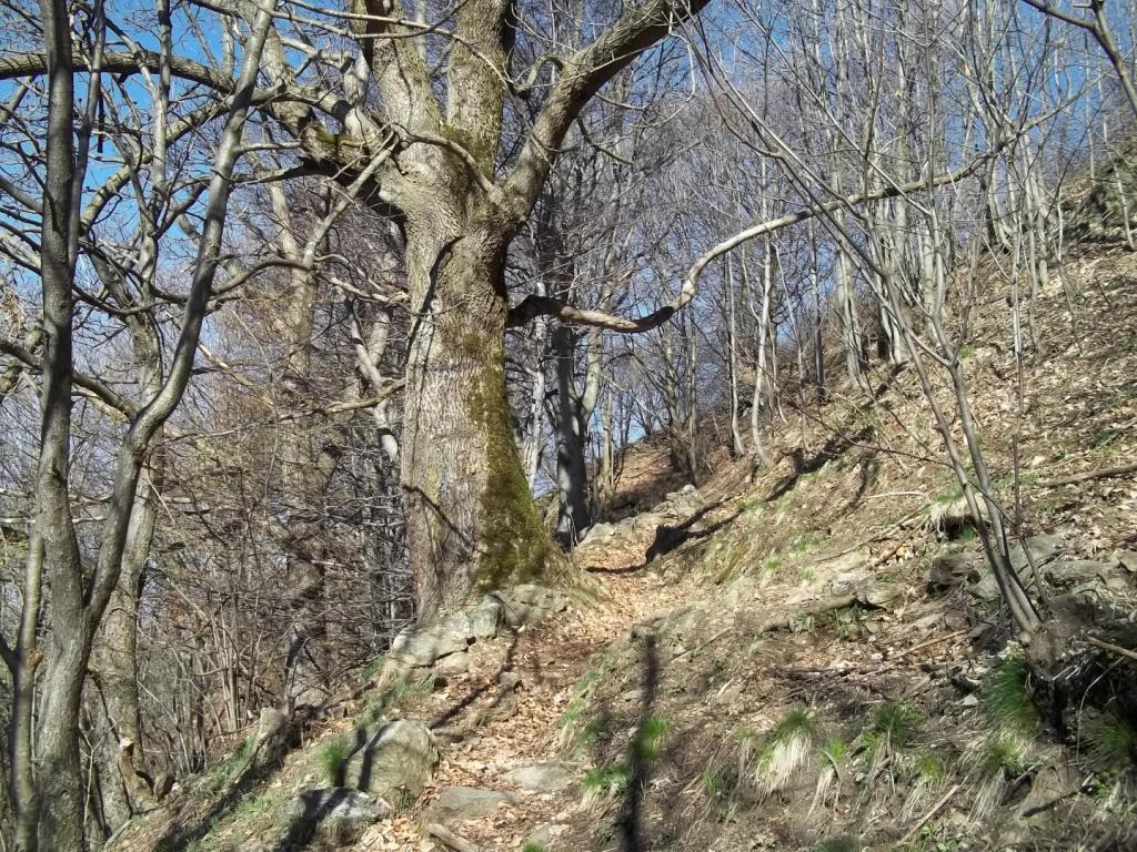 Tabor (Monte) da San Bartolomeo Val Cavargna 2013-04-25