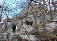 l'incontro sotto la rocciosa cima