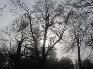 Il Bosco delle Fate nella nebbia