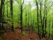 il magnifico verde dei fo'