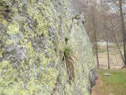 bella roccia e belle fessure