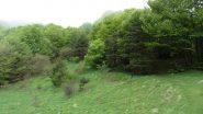 radure erbose salendo verso il Passo della Mezzaluna (19-5-2013)