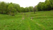 altro pianoro erboso in mezzo al fitto bosco (19-5-2013)