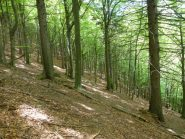 il bosco incantato in discesa