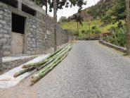 Bambù tagliati sulla strada