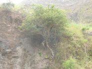 Un albero abbarbicato al terreno
