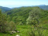 Il crinale verso l'Alpe di Baudo