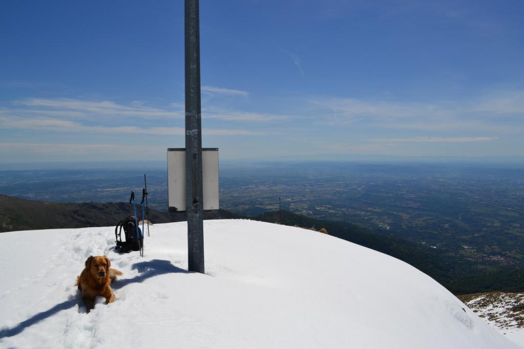 Zeus sulla Cima dell'Angiolino (2168 m)