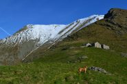 Alpe Pian Frigerole (1791 m)