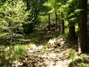 Uno dei pochi tratti nel bosco presso Rocca Fontanassa