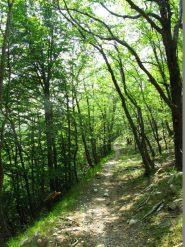 Lungo il bel sentiero nel bosco