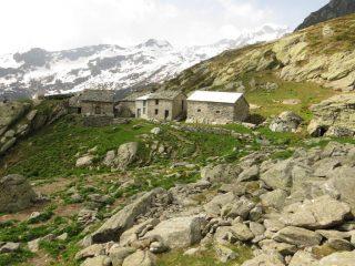 Alpi Blucchina