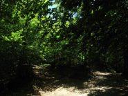 Nel bel bosco di Faggi