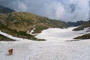 sul nevaio in discesa dal Colle Santanel
