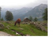 Cavallo al pascolo nei pressi di San Grato..