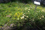 Nel giardino Peyronel (2)