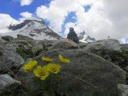 Natura pioniera, verso il Ciarforon