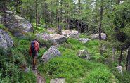 Il bel sentiero nel bosco che scende a Villa Poma