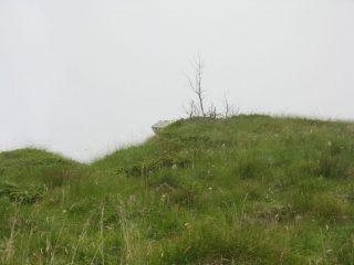 L'albero a cui puntare sopra al Colle d'Attia
