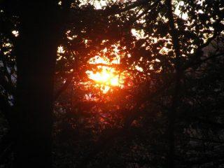 Il primo sole buca la fitta foresta di Ribordone