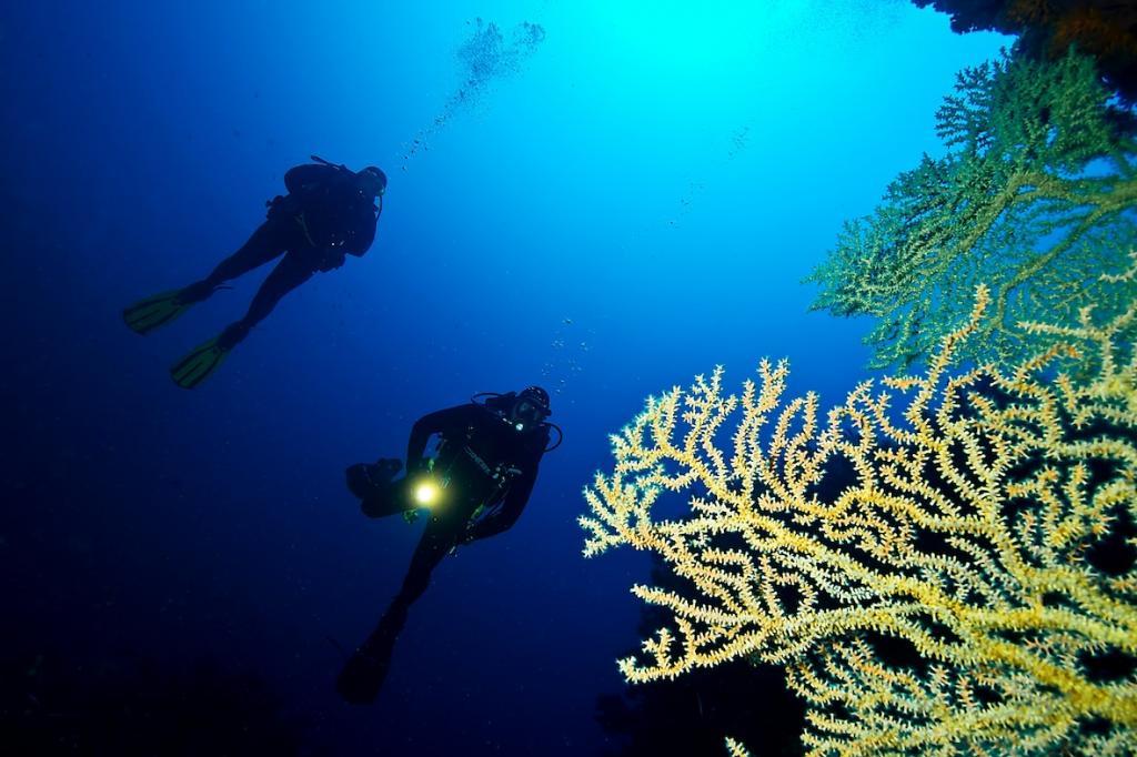 Davide e Mariuccia si avvicinano ad un enorme ramo di Gerardia Savaglia (o falso corallo nero), posto all'entrata di una grotta a -40mt (immersione Gerardia Savaglia)