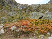 vista da basso sulla strada verso collalunga ,con colori autunnali