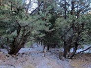 Il tetro bosco di Fliskounias