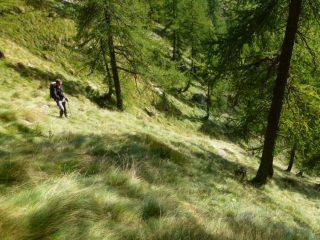 ripidi pendii verso l'alpe peghiò