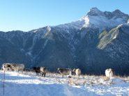mucche nella neve