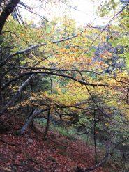 autunno nel vallone del bourcet
