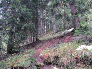 La foresta di conifere a bordo strada