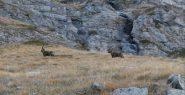 altra compagnia  sui risalti rocciosi del sentiero n. 8 E...