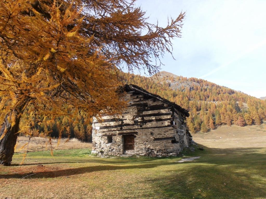 17 - autunno (1024x768)