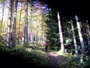Il bosco delle Navette