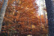 non possono mancare i colori dell'autunno
