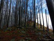 La lunga cresta dello Zatta immersa nel bosco