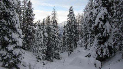 La magia del bosco innevato